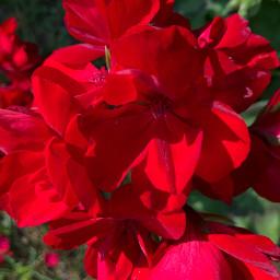 freetoedit red redandgreen filltheframe floralpattern