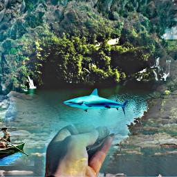 freetoedit andreiaserra12 fallow_me shark sharks