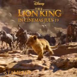 freetoedit lionking2019 lionking stampede july19