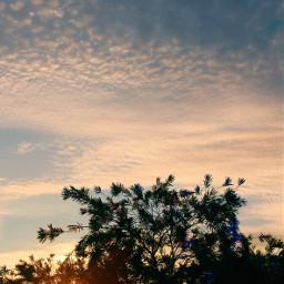 earlyinthemorning bushes shrubs sunrise beautifullight freetoedit
