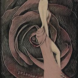 freetoedit beautifulflower beautifulrose redrose rose