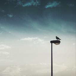 eveningsky seagul lightpole silhouettes skyandcloudsbackground freetoedit