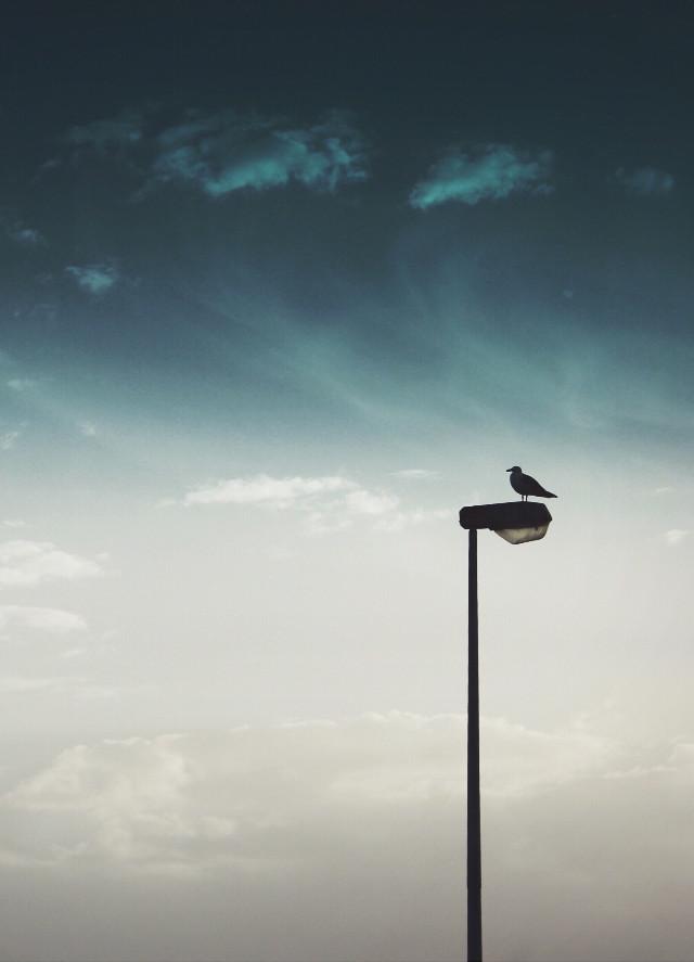 #eveningsky #seagul on a #lightpole #silhouettes #skyandcloudsbackground #solitude #colorgardient #urbannature #minimalphotography                                                        #freetoedit