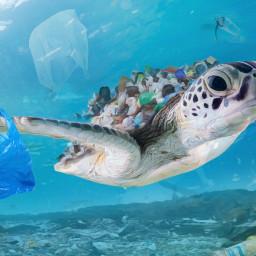 plastic oceanodeplastico changetheworld future enviorement