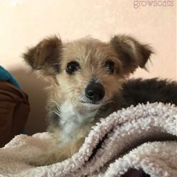 pets dog rescue adopt myphoto