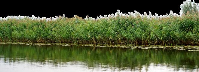 foreground water pond lakeside shore freetoedit