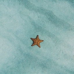 star starfish ocean nature background freetoedit