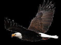 ftestickers eagle bird animal freetoedit