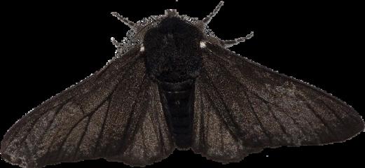 freetoedit moth edgy goth bug