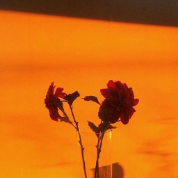 freetoedit orange orangeaesthetic aesthetic aestethicedit