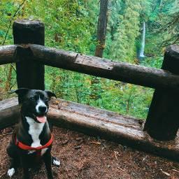 freetoedit pet dogsofpicsart dog pnw