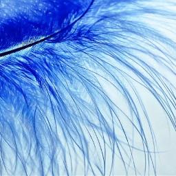 freetoedit pluma blue azul plume