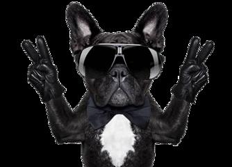 funny dog friday cool freetoedit