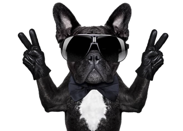 #funny #dog #friday #cool #freetoedit
