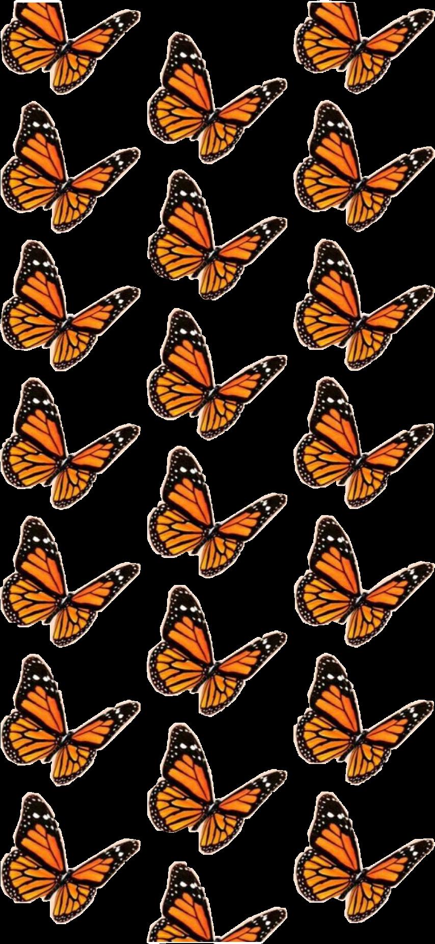 vsco butterfly background butterflybackground aesthetic...