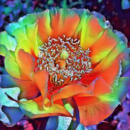 freetoedit cactusflower