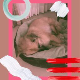 freetoedit doglover wakeup