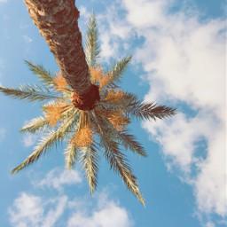 freetoedit palmtree beach lowangle bluesky