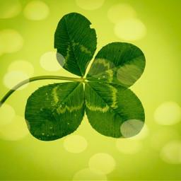 freetoedit fourleafclover clover green luck