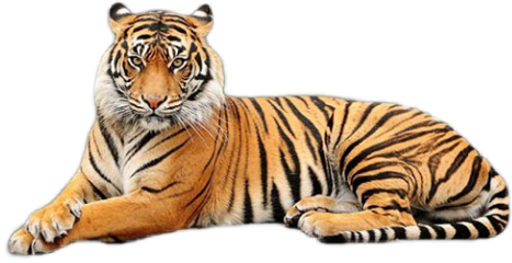 gucci tiger cute pet exotic freetoedit