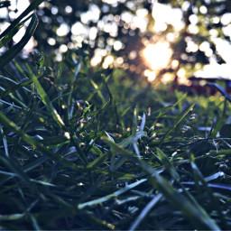 freetoedit nature lovely grassy sunsets