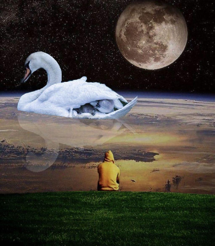 #surreal #surrealism #edit #edited #escape #moon #manipulation #creative #editedwithpicsart #lonely #freetoedit @picsart @freetoedit #followme #duck