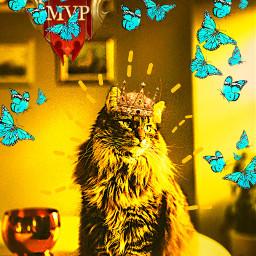 freetoedit cats bts laik