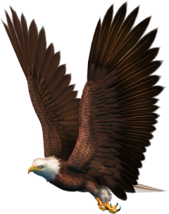 freetoedit amazing eagle big bird