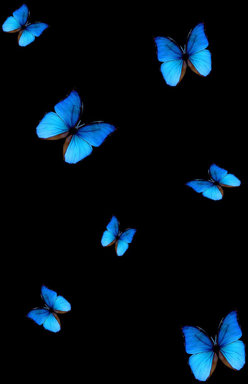 bluebutterfly sticker vsco aesthetic butterflysticker...