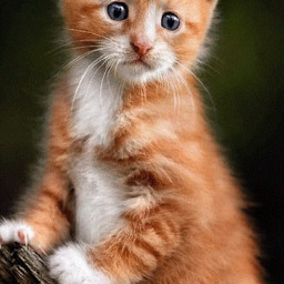 cat animals lovelyanimals stickers_everywhere stickerspopulares freetoedit