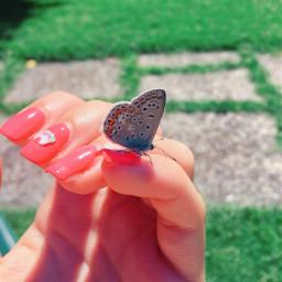 nail art butterfly freetoedit incredible