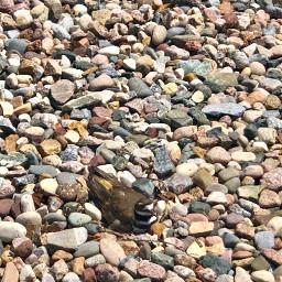 freetoedit birds killdeer rocks nesting