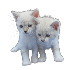 freetoedit cute kittys cats gatitos