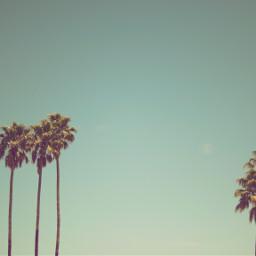 freetoedit summer palmtrees palm trees summervibes