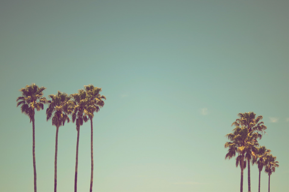 Use this image as a canvas! Unsplash (Public Domain) #freetoedit #summer #palmtrees #palm #trees #summervibes