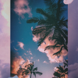 freetoedit aesthetic summer collage palmtrees