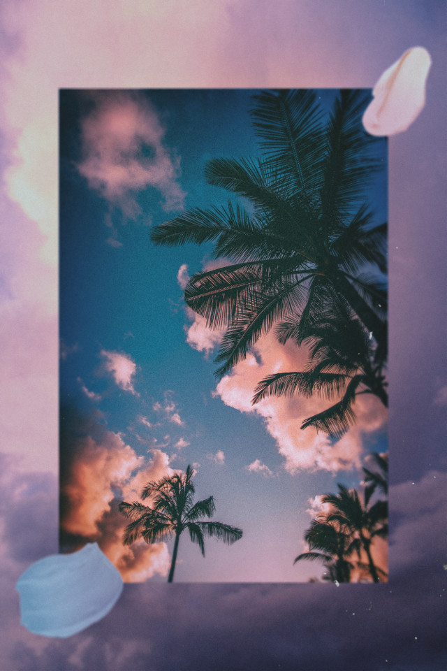 #freetoedit #aesthetic #summer #collage #palmtrees