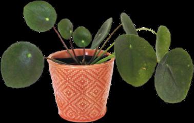 plant aesthetic arthoe planthoe plants freetoedit