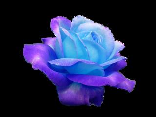 aesthetic sticker flowers colorfull beautiful freetoedit