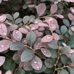 freetoedit dewdrops plants singapore