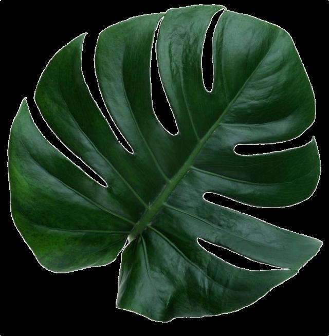 #leaves #leave #nature #greenaesthetic #aesthetic #niche #nichememe #nichememes #freetoedit