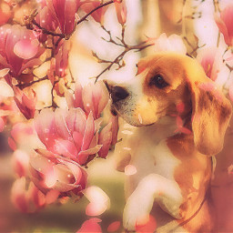 freetoedit dog beagle flower petals