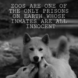 freetoedit zoos animals prison