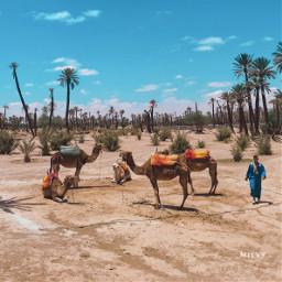 marrakech lapalmeraie oasi shotoniphone myphoto