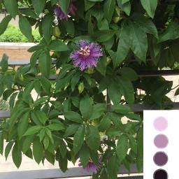 ecpaletteshow paletteshow palletechallenge flowerpower freetoedit