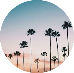 scpalmtrees palmtrees palmtree sunset aesthetic freetoedit