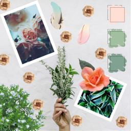 ecpaletteshow paletteshow freetoedit sage pastel