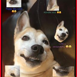 photography dogs dogsofpicsart crazydog baby freetoedit