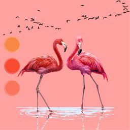 ecpaletteshow paletteshow freetoedit flamingos palleteaesthetic