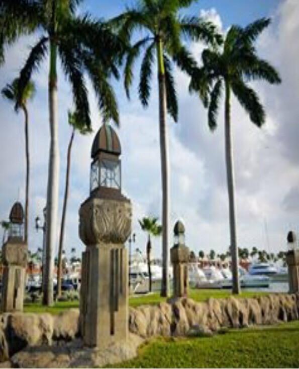 #aruba #palmtree #beautiful #photographer